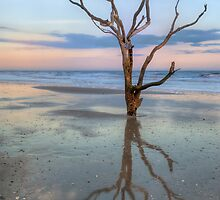 The Lonesome Tree Of Botany Bay SC by JHRphotoART