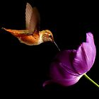 HUMMINGBIRD AND PURPLE TULIP~ by RoseMarie747