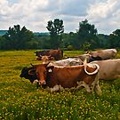 And That's No Bull by Lisa G. Putman