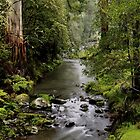 Tarra Creek. by Bette Devine