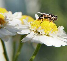 Feeding Fly by missmoneypenny
