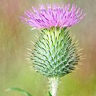 Textured Spear Thistle by M.S. Photography/Art