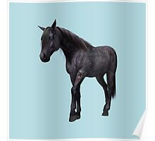 Black Horse with Blue Eyes Poster