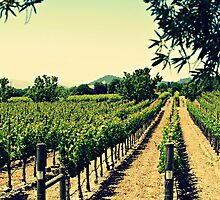 Vineyards 3 by ElleEmDee