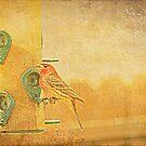 Little Finch On A Perch by kkphoto1