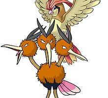 pidgeotto and Dodrio by linwatchorn