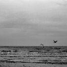sea birds by lsmelancholy