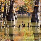 Swamp Reflection by WildestArt