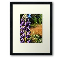 WIld Lupin Framed Print