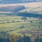 Dartmoor tree by Chris Martin