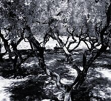 Under the olive trees by Wendy  Rauw