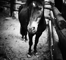 Sad Pony by Alex Volkoff