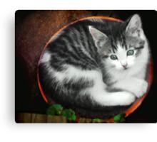 Kitten in a Flower Pot Canvas Print