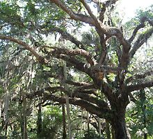Spanish Moss on an Old Tree by Brian Schell