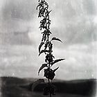 black nettle by Stuart Mcguire