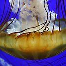 Jellyfish  by Annie Underwood