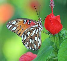 Butterfly by Bob Hardy