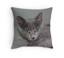 Beautiful Portrait of A Grey Russian Cross Tabby Cat Throw Pillow