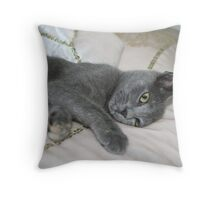 Grey Kitten Relaxed On A Bed Throw Pillow