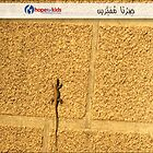 Lizard on the Wall, by Charbel by darelawlad