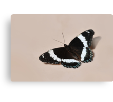 White Admiral - Butterfly Canvas Print