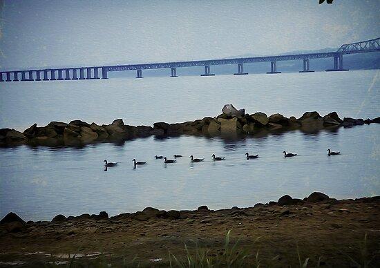 Ducks at the Tappan Zee Bridge by Yuri Lev