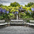 Three Benches (with Wisteria) [HDRI Panorama] by James Zickmantel