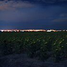 Sunflowers at Night by dotstarstudios
