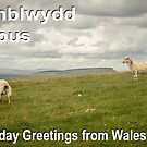 Penblwydd Hapus - Happy Birthday from Wales - Sheep Hill by digihill