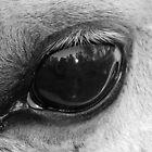 Eye of the wise by Mark Batten-O'Donohoe