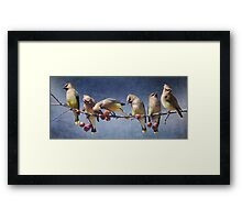 row of waxwings with crabapple fruit Framed Print