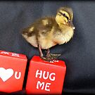I Love You... Hug Me!! - Duckling - NZ by AndreaEL