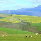 In the Overberg any season is a good season by MaanKind