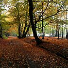 Autumn Woodland Path by JenThompson85