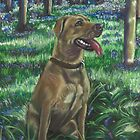Tilly in the Bluebells by Jane Smith
