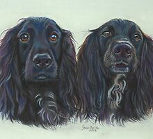Brace of Beauties by Jane Smith