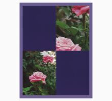 Pink Roses in Anzures 5  Blank Q9F0 by Christopher Johnson