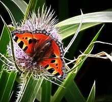Teasel and Tortoiseshell by lisa1970