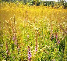 Chaparral Prairie in August Gold by TrendleEllwood