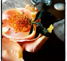 Peach Rose Petals by Barbara Wyeth