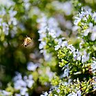 """In Flight"" - Macro image of bee in flight by Jean-Pierre Mouzon"