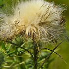 Lucky Thistle by PineSinger