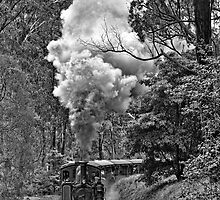 Puffing Billy by Matt Jones