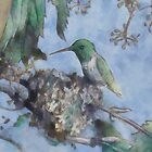 Humming Bird by Joey Gates