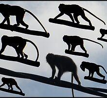 6_07_01_monkey_burst_pattern by balipatterns