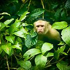Monkey by Gregorio Magno Toral Jiménez