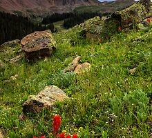 Paintbrush on Loveland Pass by Paul Gana