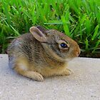 Baby Rabbit by AuntDot