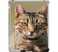 Portrait Of A Cute Tabby Cat With Direct Eye Contact iPad Case/Skin