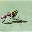 Fluro Fly by Helenvandy